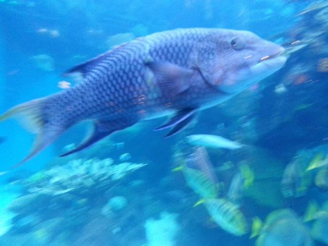 fishy7