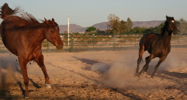 horses1-pamtanzey