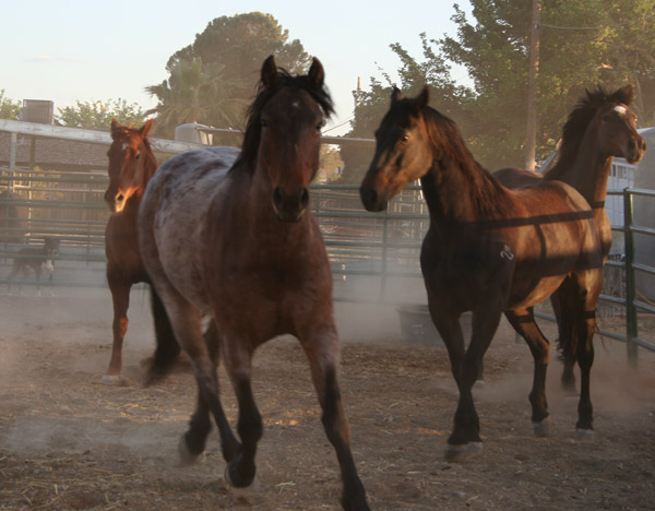 horses2-pamtanzey