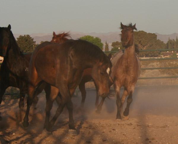 horses4-pamtanzey