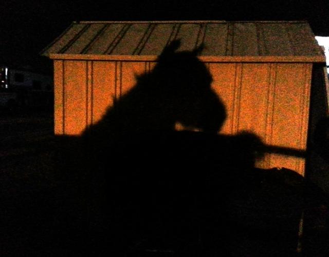 shadow-horse-pamtanzey