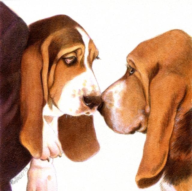 basset-puppy-dad-pamtanzey